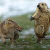 """Визначено переможця """"Найкращий фотограф дикої природи 2019""""."""